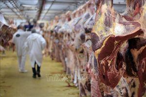 Pháp tìm được dấu vết của toàn bộ số thịt bò nghi nhiễm bẩn nhập từ Ba Lan