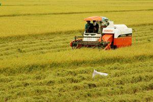 Nông dân đất Sen hồng với khát vọng sản xuất nông nghiệp bền vững