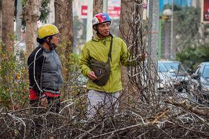 Đào quất vứt ngập phố, người dân thoải mái nhặt về chơi Tết