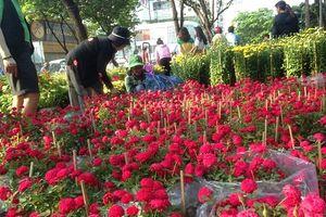 100.000 đồng/4 chậu hồng ngày 30 Tết ở Sài Gòn