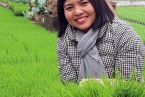 Cô gái bỏ nghề kế toán đi gieo lúa ruộng rươi, thu 'vàng 10'