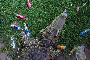 Thảo Cầm Viên ngập rác trong chuồng thú