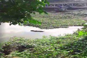 Hoảng hốt phát hiện thi thể một phụ nữ trôi trên sông ở Hải Dương