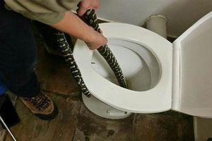 Vào nhà vệ sinh lười bật đèn, người phụ nữ gặp chuyện rùng rợn