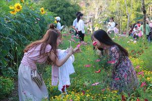 Du lịch văn hóa, sinh thái ở Đắk Lắk 'hút' khách du Xuân