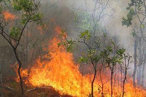 Bộ NN&PTNT công bố đường dây nóng phòng, chống cháy rừng