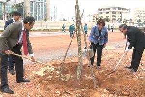 Quảng Bình: 'Tết trồng cây' phải thiết thực, hiệu quả