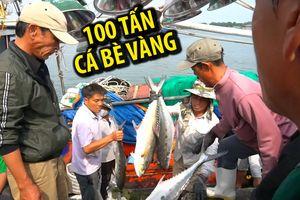 Chuyến biển đầu năm, ngư dân Quảng Trị trúng mẻ cá bè vàng hơn 100 tấn