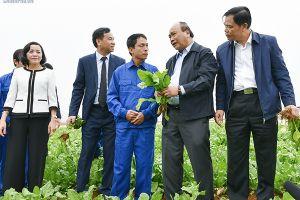 'Xông đất' ngành nông nghiệp, Thủ tướng kỳ vọng vào đòn bẩy chiến lược của VN