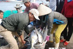 Ngư dân Quảng Trị và Quảng Ngãi trúng đậm lộc biển đầu năm