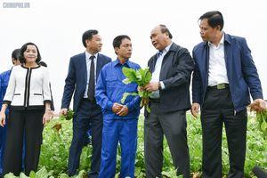 Tam nông là lĩnh vực không thể thiếu được trong sự phát triển đất nước