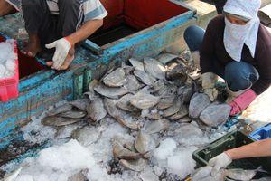 Miền Trung: Ngư dân trúng đậm chuyến biển đầu Xuân mới