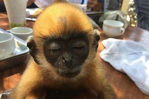 Hơn 500 cá thể động vật hoang dã được giải cứu