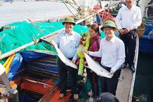 Ngư dân Quảng Trị trúng mẻ cá bè vàng hơn 100 tấn những ngày Tết