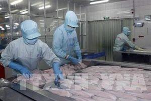 Thêm cơ hội cho cá tra Việt Nam