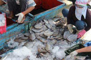 Ngư dân miền Trung trúng lộc biển đầu năm mới