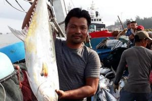 Ngư dân kể chuyện 32 giờ đánh mẻ cá 'khủng' 120 tấn