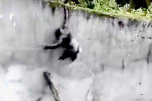 Tinh tinh bắc thang trốn khỏi sở thú