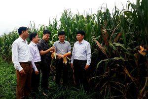 Huyện Anh Sơn thành lập 3 đoàn kiểm tra sản xuất đầu năm