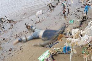 Thanh Hóa: Phát hiện thi thể nữ giới đang phân hủy mạnh trên sông Yên