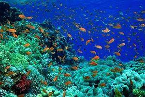 Hội nghị quốc tế về kinh tế đại dương