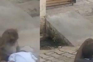 Khỉ bắt cóc bé trai 2 tuổi để có bạn chơi cùng