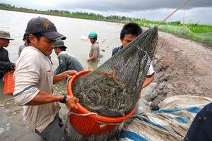 Chăn nuôi, thủy sản tiếp tục chớp thời cơ