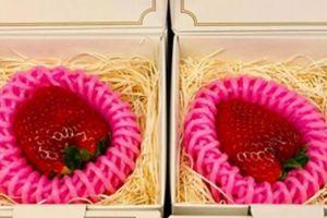 Độc nhất vịnh Bắc Bộ: 500k 1 quả dâu tây Nhật làm quà Valentine