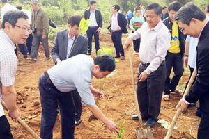 Ngọc Lặc (Thanh Hóa): Sẽ trồng thêm 700ha rừng