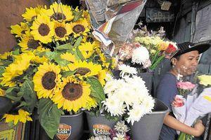 Valentine: Giới trẻ tặng hoa hướng dương vì hoa hồng quá đắt