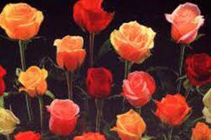 Nếu chưa kịp chuẩn bị quà, đừng lo lắng, một năm có đến 3 ngày Valentine!