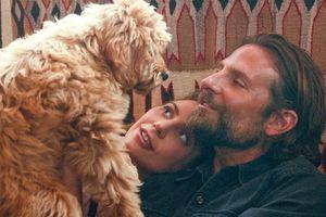 Bradley Cooper giành giải 'Oscar đặc biệt' với A Star Is Born
