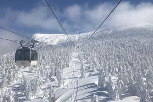 Đến Nhật Bản khám phá khu rừng 'quái vật tuyết'