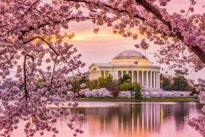 Ngắm những rừng hoa anh đào khi vào xuân trên khắp thế giới