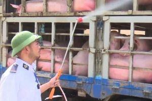Bộ NNPTNT công bố 2 kịch bản ứng phó dịch tả lợn châu Phi vào VN