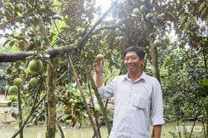 Đẩy mạnh tái cơ cấu, phát triển mặt hàng nông sản phù hợp, hiệu quả