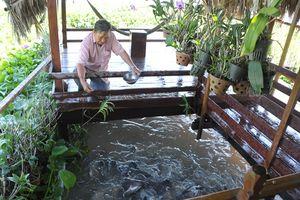 Lão nông 'dụ' đàn cá sông về nuôi được Bộ trưởng Bộ NN-PTNT tặng bằng khen
