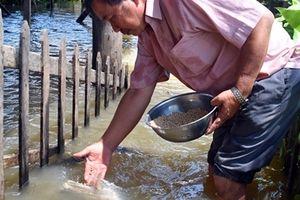 Khen thưởng lão nông miền Tây 'dẫn dụ' cá sông làm thú cưng