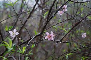 Dự báo thời tiết 17/2: Hà Nội có mưa rào, nhiệt độ giảm; Nam bộ nắng nóng