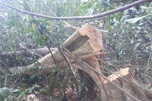 Đắk Nông: Khởi tố vụ án phá rừng quy mô lớn trong dịp Tết Nguyên Đán