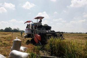 Tìm cách gỡ khó cho người trồng lúa Đồng bằng sông Cửu Long