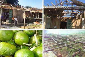 Gió giật mạnh làm hư hại gần 2000 ngôi nhà, 95 tấn cam Hàm Yên bị rụng