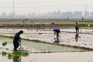 Nhiều địa phương đã đủ nước gieo cấy vụ Đông Xuân