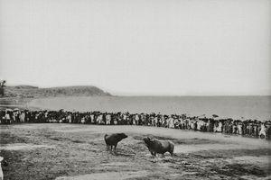 Hình độc về hội chọi trâu Đồ Sơn 1 thế kỷ trước