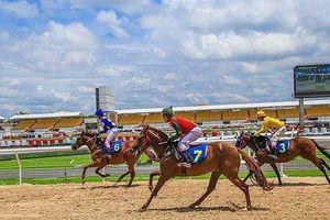 Đà Nẵng lo ngại nhà đầu tư Trung Quốc 'chạy' khỏi dự án trường đua ngựa