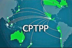 Thêm nhiều nước xem xét tham gia: CPTPP chứng tỏ sức hút