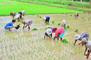 Gần 91% diện tích vụ xuân của Hà Nội đủ nước gieo cấy