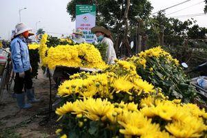 Vùng trồng hoa Mê Linh: Kỳ vọng sức mua tăng