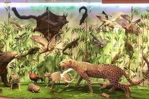 Những mẫu sinh vật rực rỡ trên cao nguyên đá Đồng Văn
