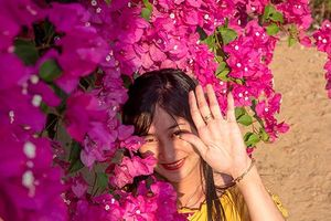 Chiêm ngưỡng 'cụ' hoa giấy trăm triệu ở đảo Lý Sơn